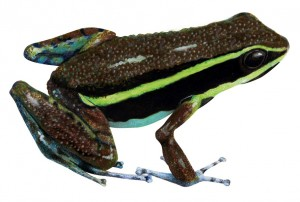 Frog one