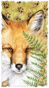 Red Fox CWF